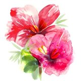 Floral Beauty II Art Print