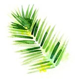 Tropical Icons Palm Frond Art Print