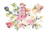 Shades of Pink Watercolor Floral Art Print
