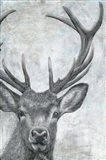 Portrait of a Deer Art Print