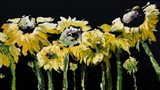 Sunflower Field on Black Art Print