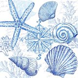 Coastal Sketchbook Shell Toss Art Print