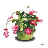 Cactus Flowers VIII Art Print