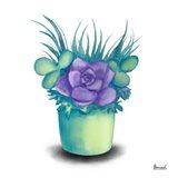 Turquoise Succulents III Art Print