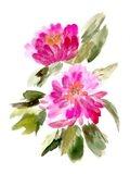 Farmhouse Florals VIII Art Print