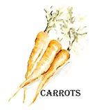 Veggie Sketch V-Carrots Art Print