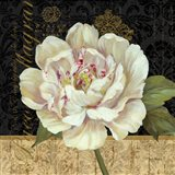 Antique Still Life Peony Art Print