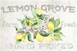 Lemon Grove I Art Print