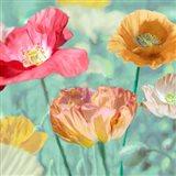 Poppies in Bloom II Art Print