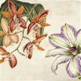 Panneau Botanique V Art Print