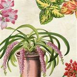 Panneau Botanique VII Art Print
