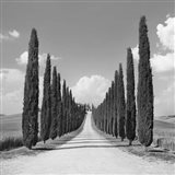 Cypress alley, San Quirico d'Orcia, Tuscany (detail) Art Print