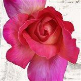 Spring Roses I Art Print