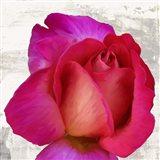 Spring Roses III Art Print