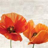 Bright Poppies I Art Print