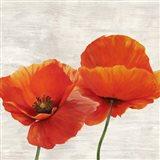 Bright Poppies II Art Print
