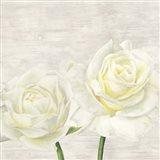Classic Roses I Art Print