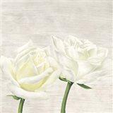 Classic Roses II Art Print