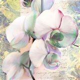Kaleidoscope Orchid (detail) Art Print