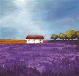 Field of Lavender I Art Print