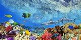 Reef Sharks and fish, Indian Sea Art Print