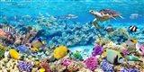 Sea Turtle and fish, Maldivian Coral Reef Art Print