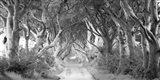 The Dark Hedges, Ireland (BW) Art Print
