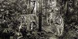 Bengal Tigers (detail, BW) Art Print
