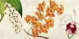 Panneau Botanique II Art Print