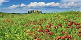 Farm House with Cypresses and Poppies, Tuscany, Italy Art Print