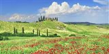 Farmhouse with Cypresses and Poppies, Val d'Orcia, Tuscany Art Print