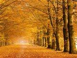 Woods in Autumn Art Print