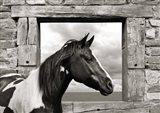 Painted Horse (BW) Art Print