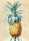 Pineapple, After Redoute Art Print