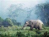 African Elephant, Ngorongoro Crater, Tanzania Art Print