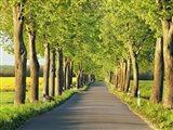 Lime Tree Alley, Mecklenburg Lake District, Germany 1 Art Print