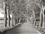 Lime Tree Alley, Mecklenburg Lake District, Germany 2 Art Print