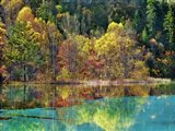 Forest in autumn colours, Sichuan, China Art Print