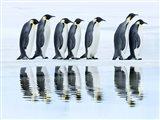 Emperor Penguin Group, Antarctica Art Print