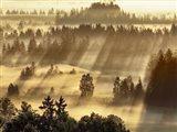 Fog Impression At Sindelbachfilz, Bavaria, Germany Art Print