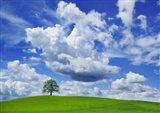 Oak and clouds, Bavaria, Germany Art Print
