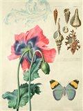 Cabinet of Curiosities 3 Art Print