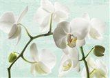 Celadon Orchids Art Print