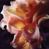 Calla Lilies - Emerging Dawn Art Print