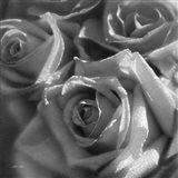 Rose Pedals B&W Art Print