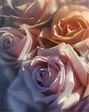 Rose Pedals Art Print