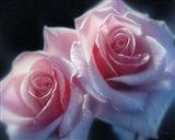 Roses - Pink Pair Art Print