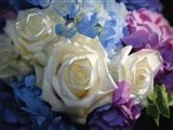 White Roses - Dancing Light Art Print