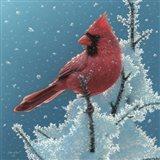 Cardinal - Cherry on Top Art Print