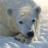 Polar Bear Club Art Print